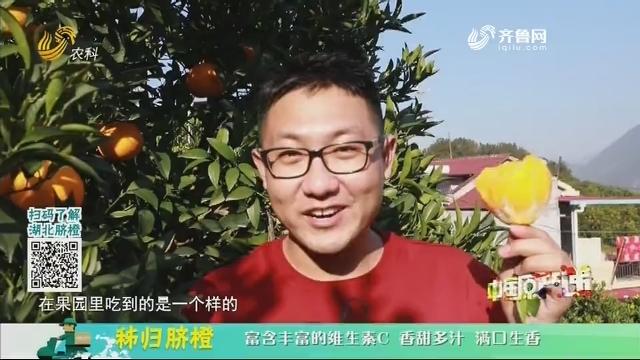 20201221《中国原产递》:秭归脐橙