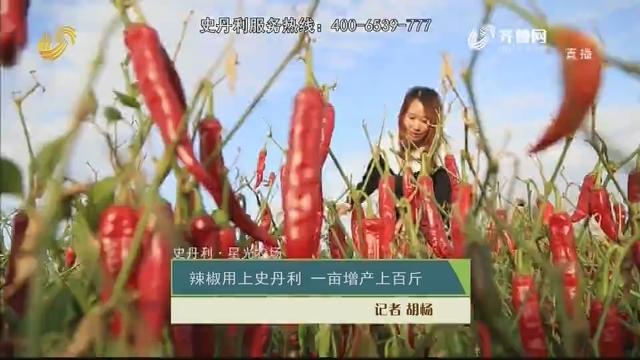 【史丹利·星光农场】辣椒用上史丹利 一亩增产上百斤