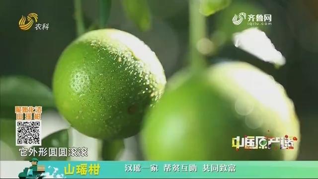 20201222《中国原产递》:山瑶柑