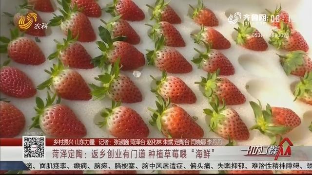 """【乡村振兴 山东力量】菏泽定陶:返乡创业有门道 种植草莓喂""""海鲜"""""""