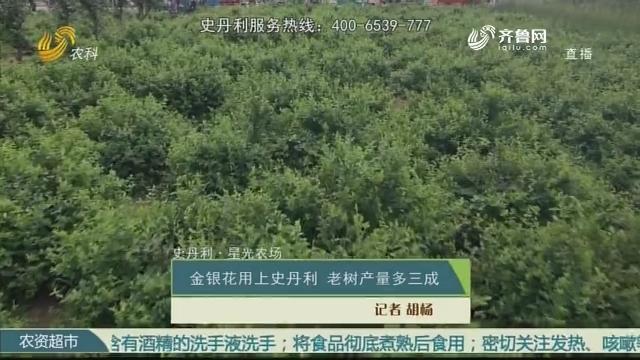 【史丹利·星光农场】金银花用上史丹利 老树产量多三成