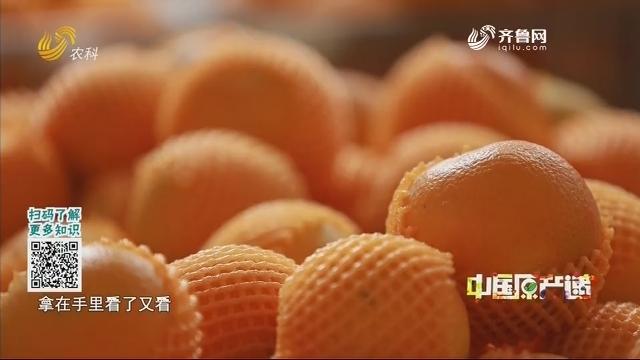 20201223《中国原产递》:秭归脐橙