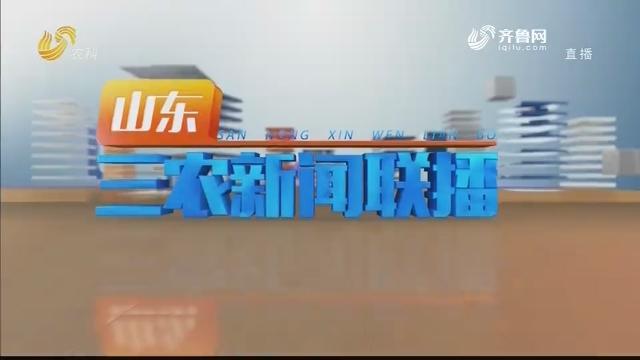 2020年12月23日山东三农新闻联播完整版