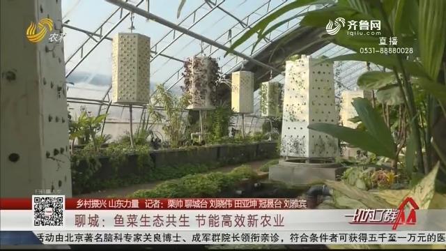 【乡村振兴 山东力量】聊城:鱼菜生态共生 节能高效新农业