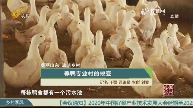 【美丽山东 清洁乡村】养鸭专业村的蜕变