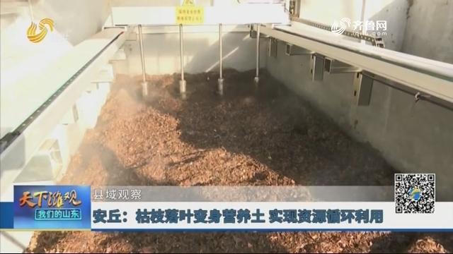 【县域观察】安丘:枯枝落叶变身营养土 实现资源循环利用