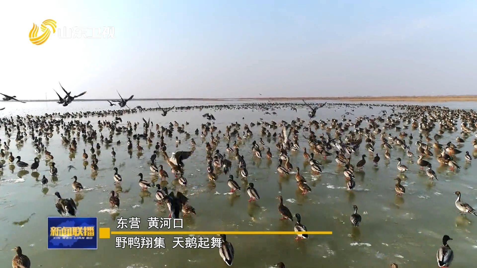 群鸟嬉戏 绘就冬日画卷