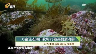 万亩生态海洋牧场 打造高品质海参