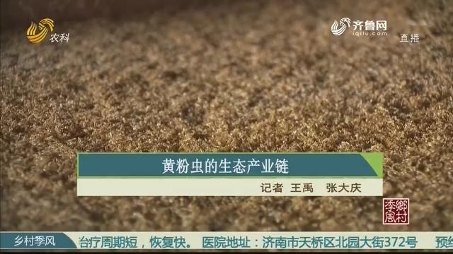 黄粉虫的生态产业链