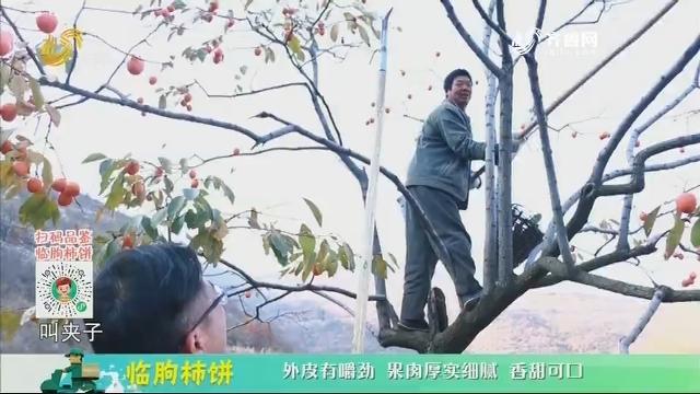 20201226《中国原产递》:临朐柿饼