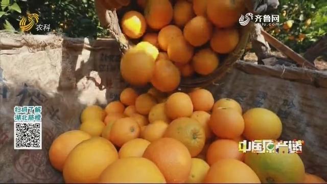20201227《中国原产递》:秭归脐橙