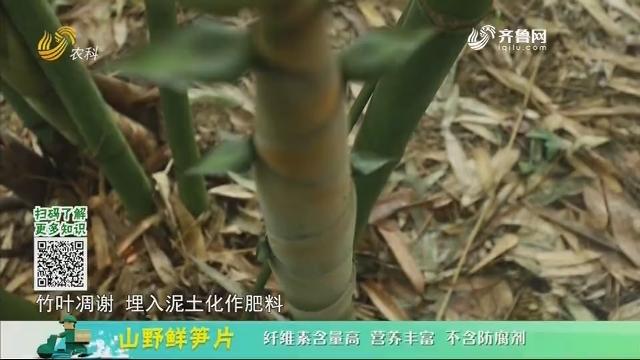 20201228《中国原产递》:山野鲜笋片