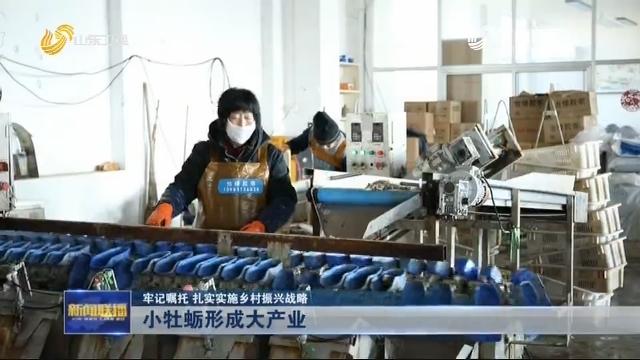 【牢记嘱托 扎实实施乡村振兴战略】小牡蛎形成大产业
