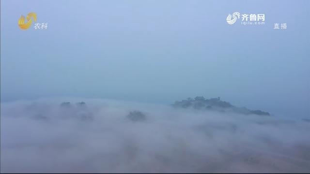烟台蓬莱平流雾景观