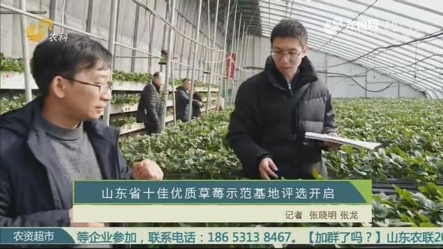 山东省十佳优质草莓示范基地评选开启