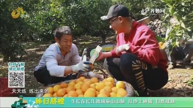 20201229《中国原产递》:秭归脐橙