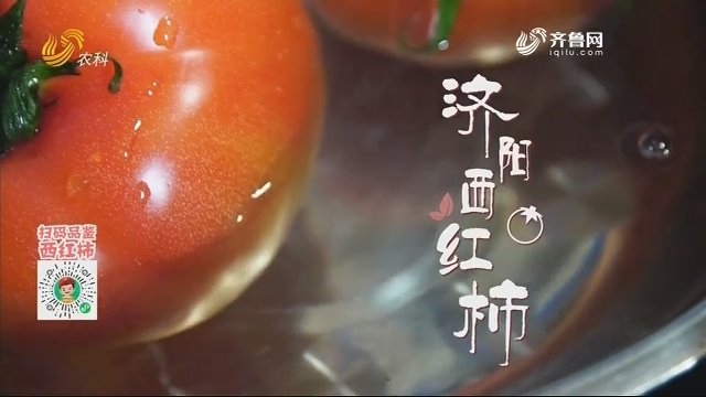 20201231《中国原产递》:济阳西红柿