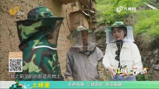 20210102《中国原产递》:土蜂蜜