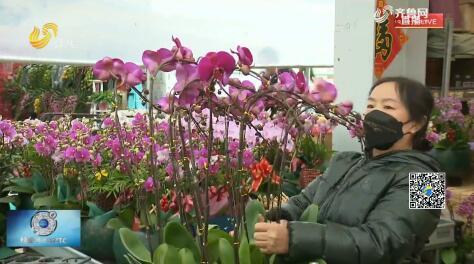 青州:鲜花扮新年