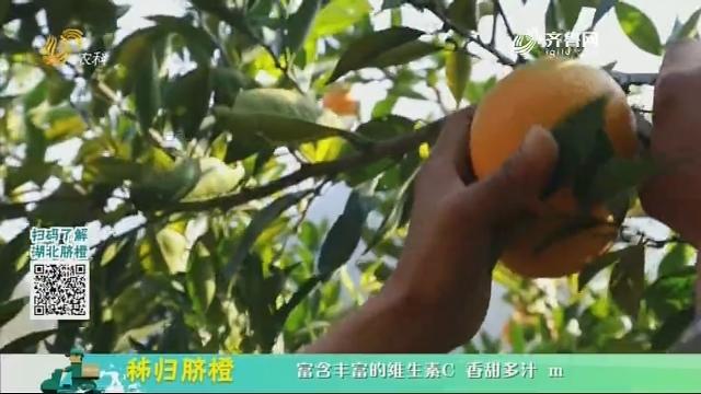 20210103《中国原产递》:秭归脐橙
