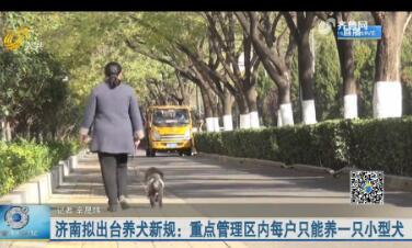 济南拟出台养犬新规:重点管理区内每户只能养一只小型犬