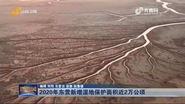2020年东营新增湿地保护面积近2万公顷