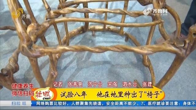 """新奇!泗水农民种出""""植物""""椅子"""