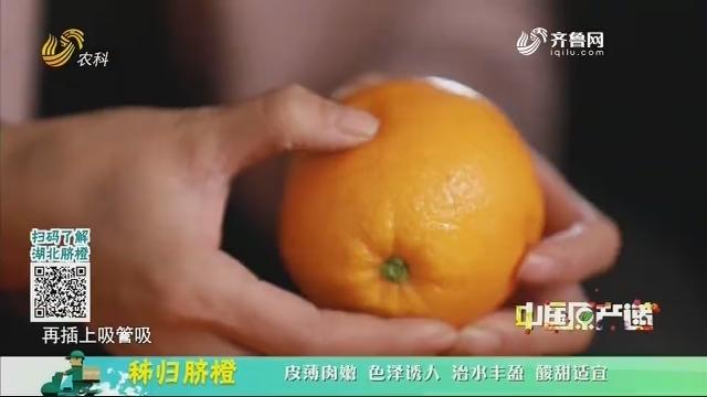 20210106《中国原产递》:秭归脐橙