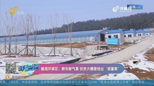 """威海环翠区:新年新气象 扶贫大棚里结出""""致富果"""""""