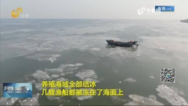 【战严寒】青岛胶州湾海冰面积扩大到104平方公里 渔民积极应对