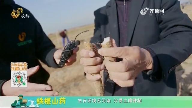 20210109《中国原产递》:铁棍山药