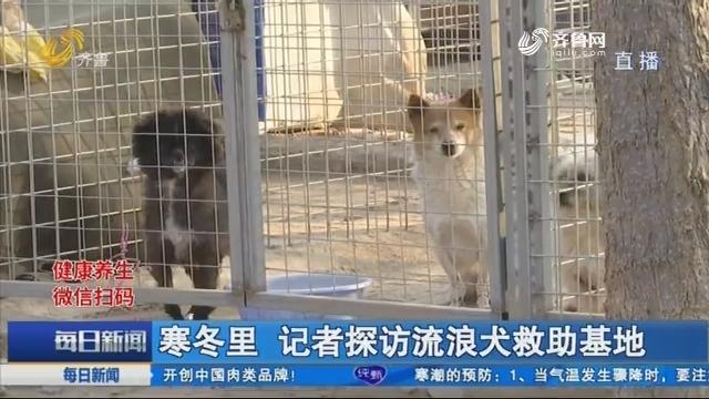 寒冬里 记者探访流浪犬救助基地