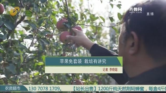 【三方赢高产 冠军示范田】苹果免套袋 栽培有讲究