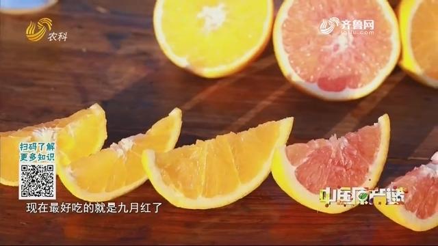20210111《中国原产递》:秭归脐橙