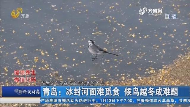 青岛:冰封河面难觅食 候鸟越冬成难题