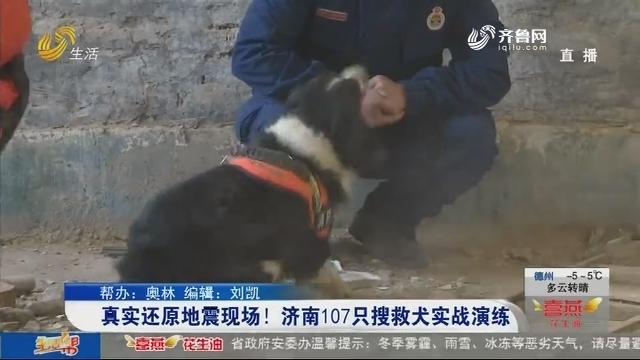 真实还原地震现场!济南107只搜教犬实战演练