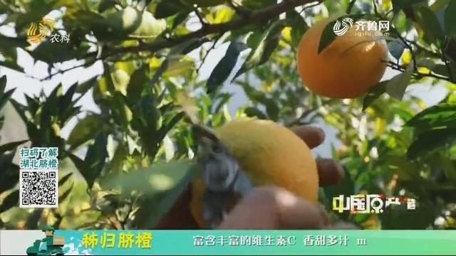 20210114《中国原产递》:秭归脐橙