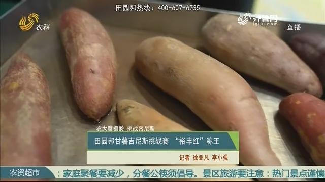 """【农大腐植酸 挑战吉尼斯】田园邦甘薯吉尼斯挑战赛 """"裕丰红""""称王"""
