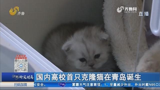 国内高校首只克隆猫在青岛诞生