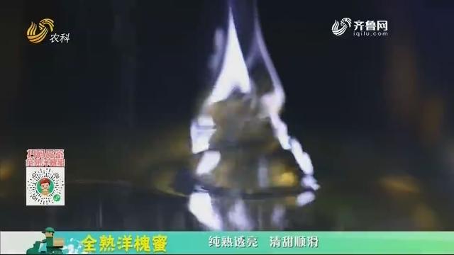 20210116《中国原产递》:全熟洋槐蜜