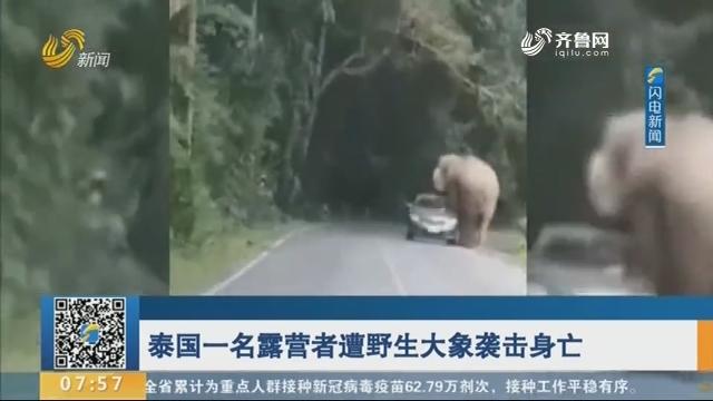 泰国一名露营者遭野生大象袭击身亡
