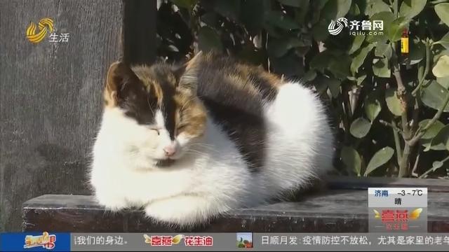 """萌翻啦!景区内海豹和猫咪的""""幸福生活"""""""
