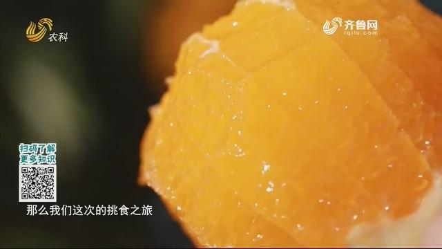 20210117《中国原产递》:秭归脐橙