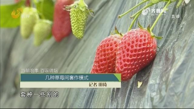 【当前农事·百家讲坛】几种草莓间套作模式