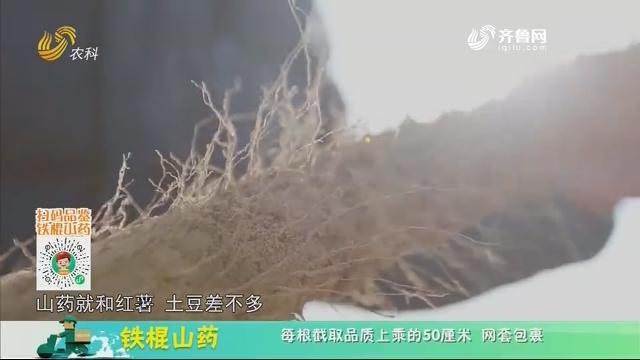 20210118《中国原产递》:铁棍山药