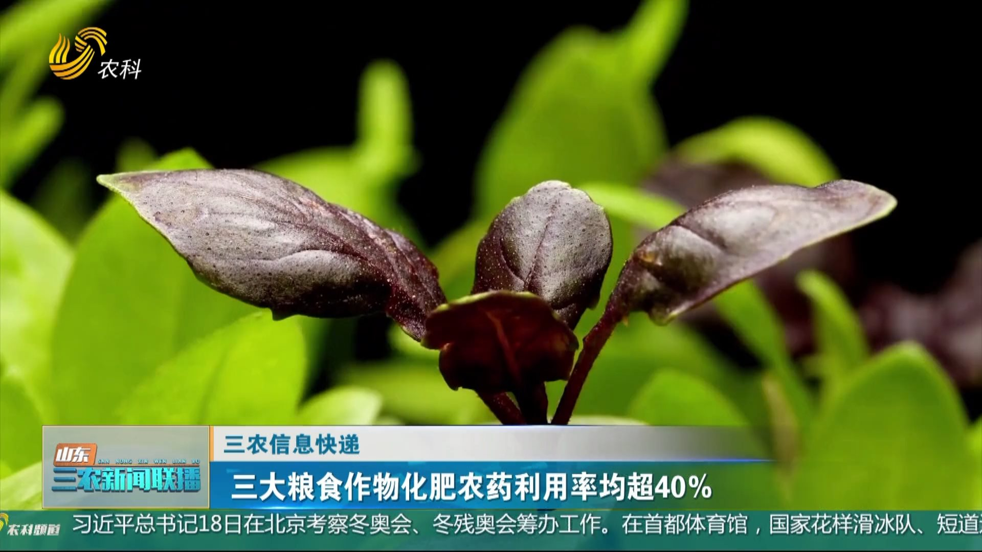 【三农信息快递】三大粮食作物化肥农药利用率均超40%