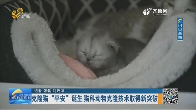 """克隆猫""""平安""""诞生 猫科动物克隆技术取得新突破"""