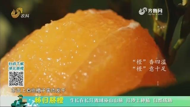 20210120《中国原产递》:秭归脐橙