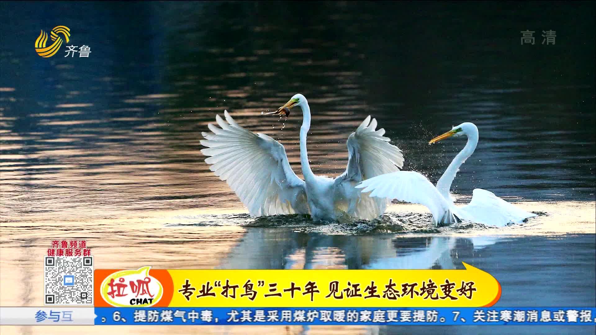 济南小清河,迎来过冬候鸟