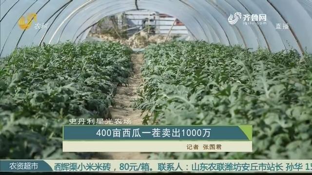 【史丹利·星光农场】400亩西瓜一茬卖出1000万